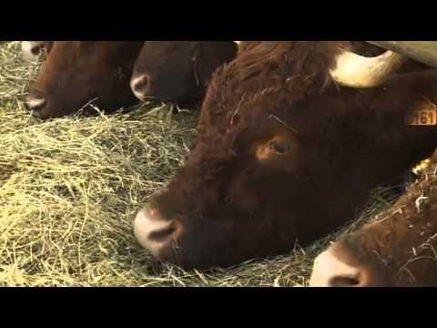 Le Boeuf d'herbe - Vente directe, du champ a l'assiette