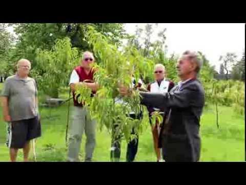 Ivan Hričovský: Broskyňa S Rezom V Tvare štíhle Vreteno