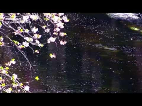 SAKURA NAGASHI 桜流し - 宇多田ヒカル (Quiet Version) - (Sam Yung Ft. YABISI)