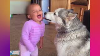 Babies and Animals   Funny Friends  The most comic and pretty video