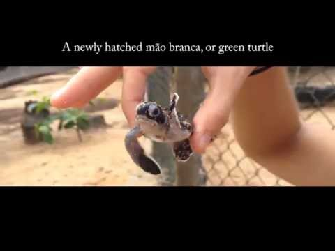 The cutest baby sea turtles on Jalé Beach, São Tomé