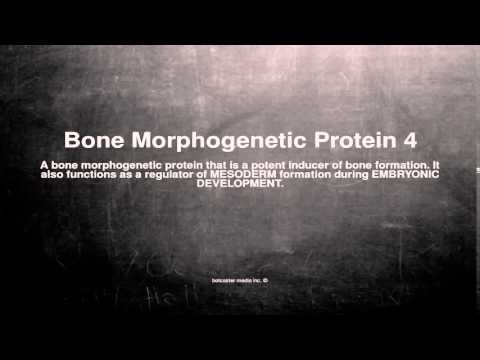 Medical vocabulary: What does Bone Morphogenetic Protein 4 mean