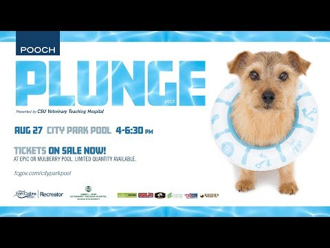 view Pooch Plunge video