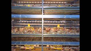FIT Broiler Cage System
