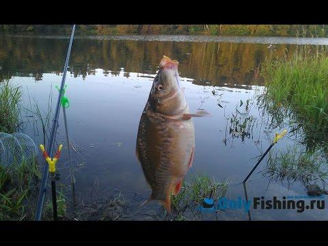 секреты при ловле карася на реке и озере