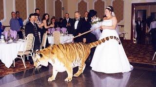 Pet FREAKIN' Tigers!