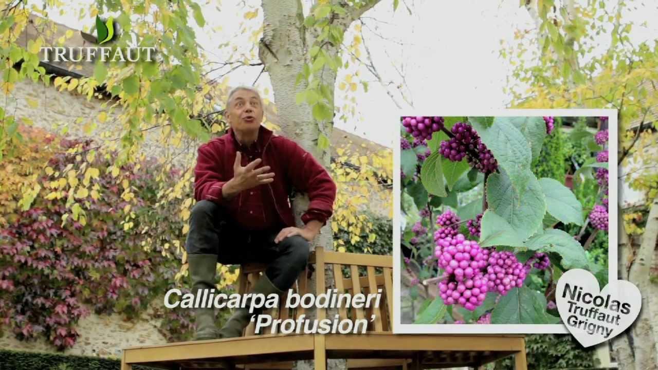 Calendrier du jardinier nos conseils jardin en novembre for Calendrier du jardin