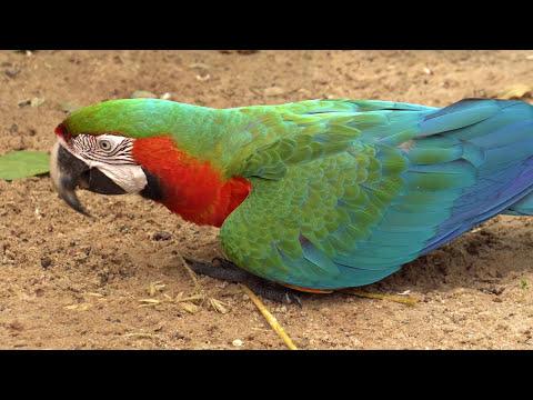 Motorradreise Südamerika 2016/17 Teil 7 Iguazu Wasserfälle Brasilien