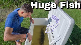 NEW BIG FISH Rescued From SMALL POND!