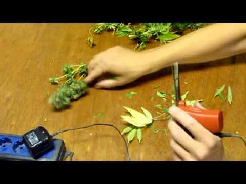 Testarossa Marijuana Trimmer.mpg