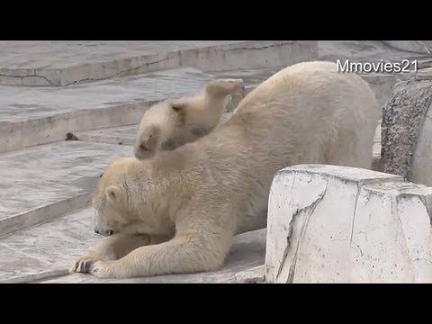 ララ滑り台~Polar Bear mother slide