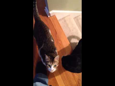 Cats Greet Owner After Two Months Away
