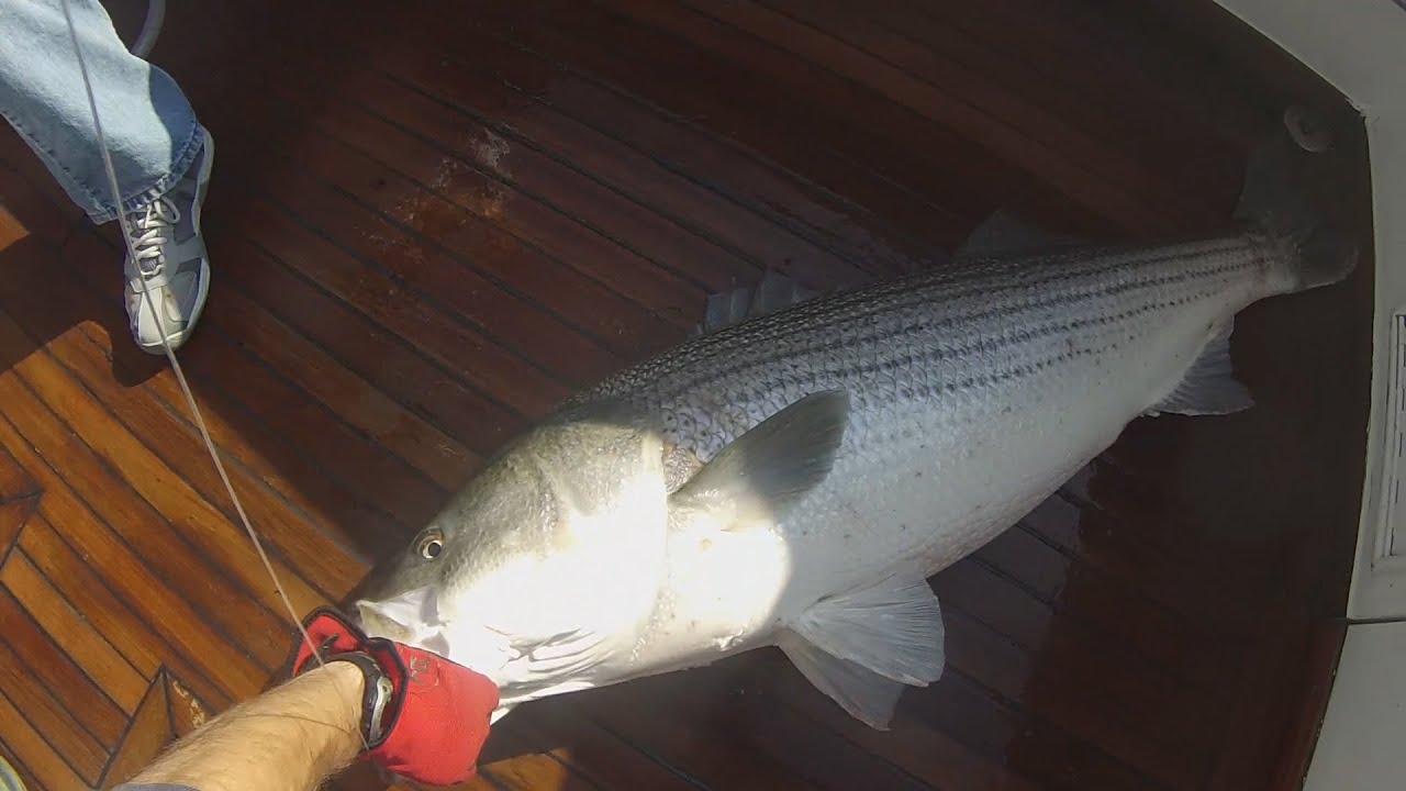 Fishing Montauk on the Adah k 52Pound Striped Bass