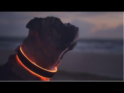 5 Dog Gadgets You Should Have
