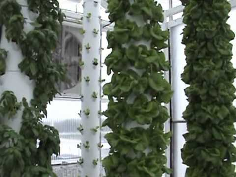 Aquaponics System In A Retractable Roof Greenhouse In
