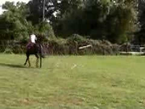 la pampa polo horse Video