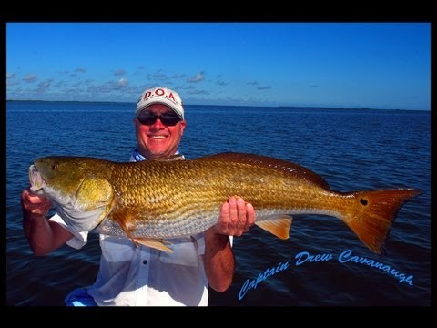 Mosquito Lagoon Bull Redfish - Orlando Fishing Guide Captain Drew Cavanaugh