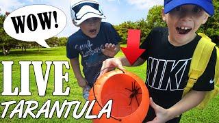 Giant Tarantula in our Halloween Bucket!