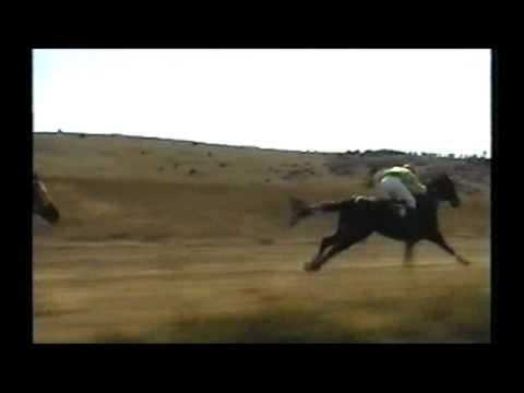 Trka Konja u Delimedje!!!! 11.09.2011.god.