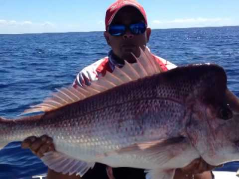 Snapper fishing with shads 4 inch flick tails off the Gold Coast