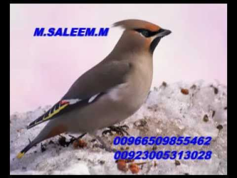 Talib Hussain Dard Old Song (mera Gham De Nal Ghuzara Ae) video