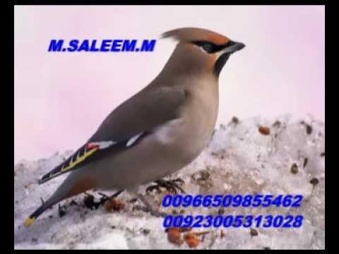 Talib Hussain Dard Old Song (میرا غم دے نال گزارا اے) video