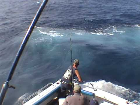 fred's good striped marlin