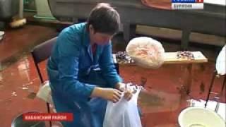 ФССОБ выпустил в Байкал 100 млн. мальков омуля