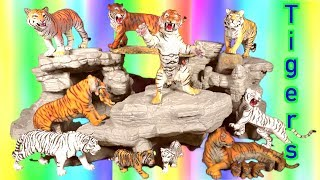 Wild Animals -  Zoo Animals - Learn about Tigers 🐯 Kids Toys - Educational