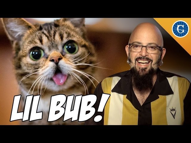 Lil BUB chats with Jackson Galaxy!