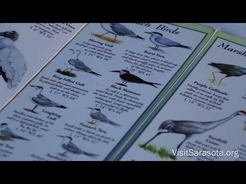 Visit Sarasota County: Birding at Celery Fields