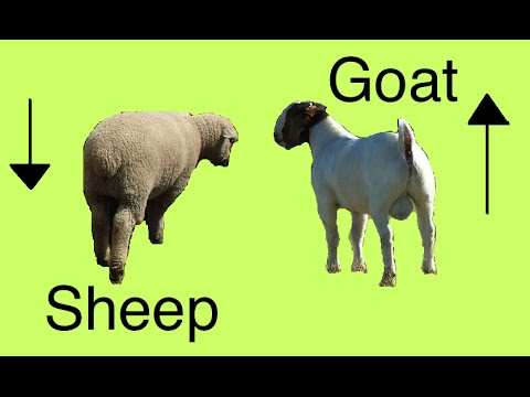 Sheep and Goat Secrets (Differences)