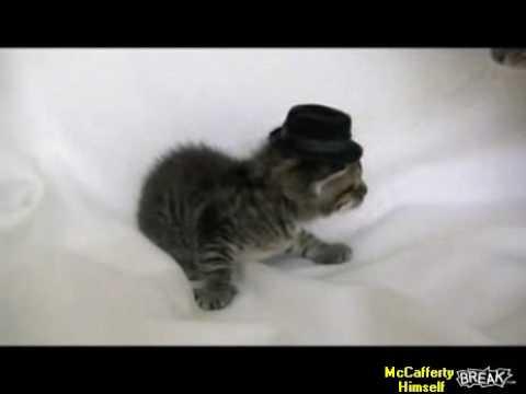 Cat In Hat Kitten