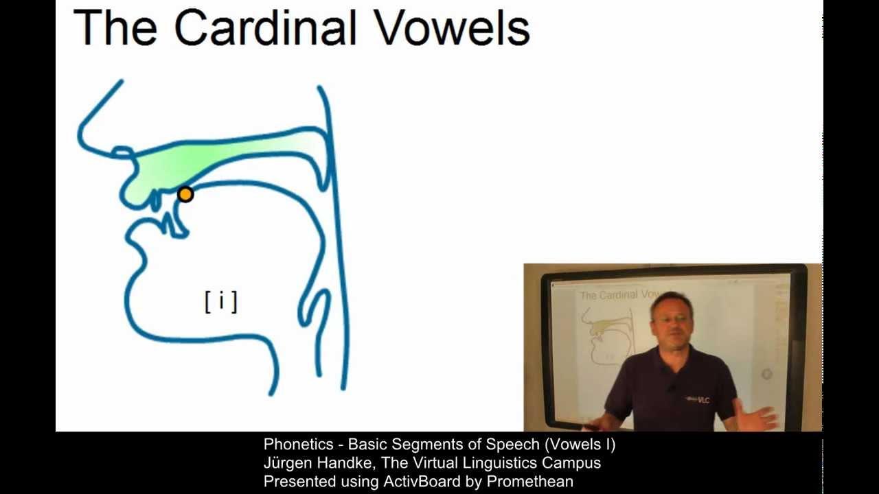 phonetics - basic segments of speech  vowels i