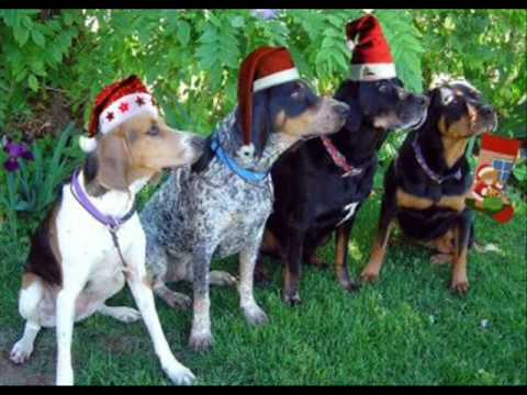 Video Of Dogs Barking Jingle Bells