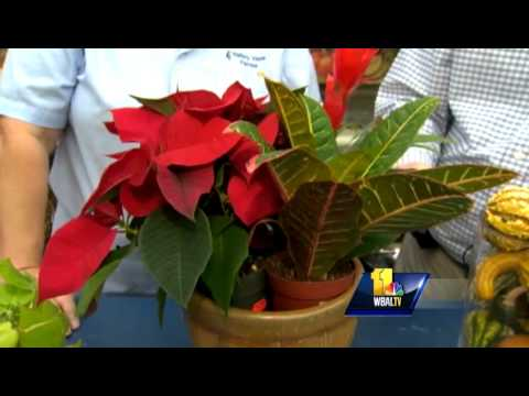 Sunday Gardeners turn indoor plants into holiday decor