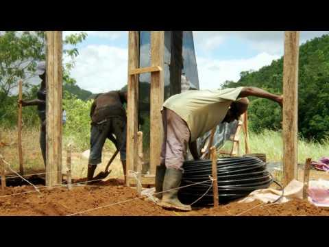 Greenhouse Farming in St. Ann, Jamaica
