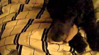 Download Song VEDA #5- DOGPLAY Free StafaMp3