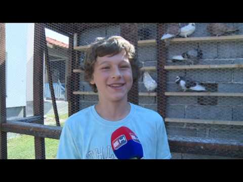 21 06 2017    BN Njegos najmladji golubar u BiH