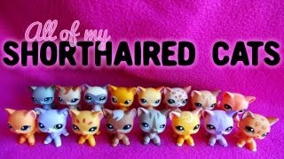 All of My LPS Shorthaired Cats!