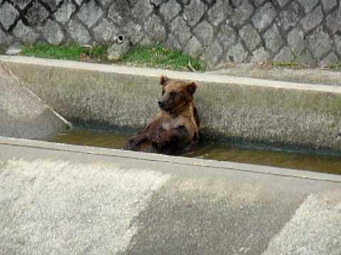くまの水浴び「カイーの」