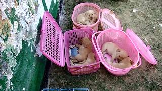 Dog Market Part 3 with Phone number and Address.. MB- 8813825366, 9813625262-DOGGYZ WORLD