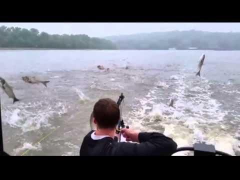 Bowfishing Asian Carp Invasion