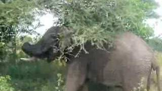 Elephant Farting - Funny, Dramatic, Disgusting