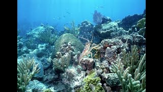 Scuba Diving Looe Key Reef (with shark experience)
