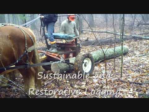Streamline Timberworks Sustainable Foresty  Floyd County Virginia LCF Group