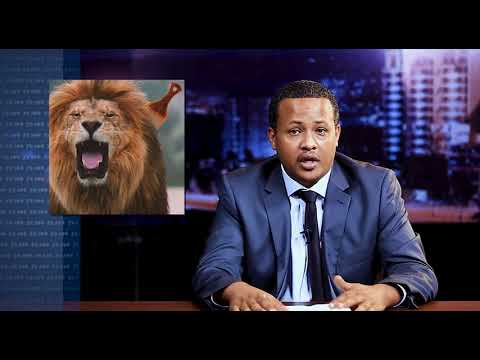 News Magazine Comedy Kana TV: የአንበሳ ጊቢ እንበሶች የት ግቢ ገቡ - By Comedian Abiy