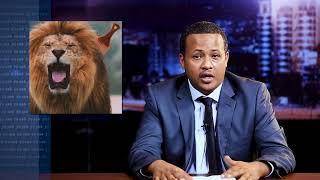 What happen to the Lions in AMbesa Gebi - yaz lekek