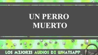 Un Perro Muerto - Conversaciones De Whatsapp - Los Mejores Audios Y Videos Whatsapp