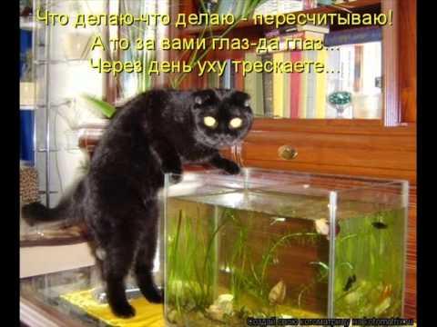 кошка ловит рыбку фото
